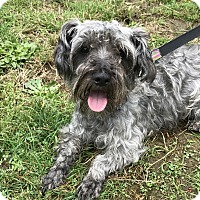 Adopt A Pet :: Timmy - Tumwater, WA