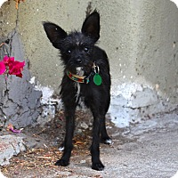 Adopt A Pet :: Amelia EARheart! 5 pounds - Los Angeles, CA