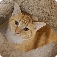 Adopt A Pet :: Braveheart - Naperville, IL