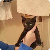 Adopt A Pet :: Mocha - Tumwater, WA