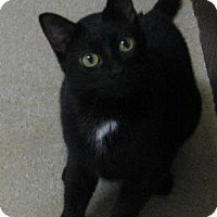 Adopt A Pet :: Ida - Gary, IN