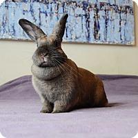 Adopt A Pet :: Lulu - Brooklyn, NY