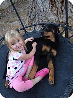 Rottweiler Dog for adoption in Laurel, Montana - Rosy