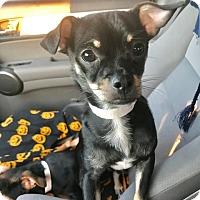 Adopt A Pet :: Frodo - Spring, TX