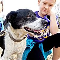 Adopt A Pet :: Dakota - St. Francisville, LA