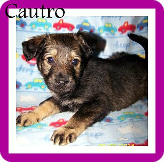 Cautro | Adopted Puppy...