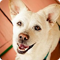 Adopt A Pet :: Sunny - Acton, CA