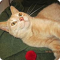 Adopt A Pet :: Charley - Jeffersonville, IN