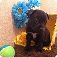 Adopt A Pet :: Mikey - Inglewood, CA