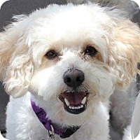 Adopt A Pet :: Kipper - La Costa, CA