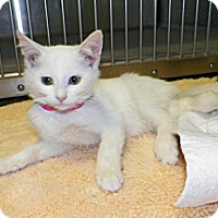 Adopt A Pet :: Casey - Dover, OH