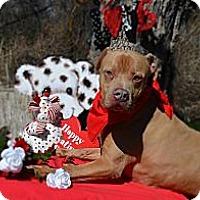 Adopt A Pet :: L.B. - Burleson, TX
