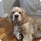 Adopt A Pet :: MR. WATSON