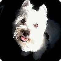Adopt A Pet :: Sugar - Carrollton, TX
