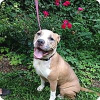 Adopt A Pet :: Missy - Kimberton, PA