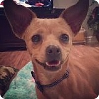 Adopt A Pet :: Sammy - Las Vegas, NV
