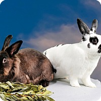 Adopt A Pet :: James - Marietta, GA