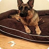 Adopt A Pet :: Jackie - Burbank, CA