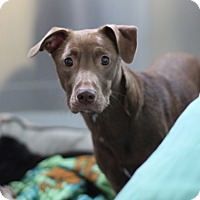 Adopt A Pet :: Rum Rum - Grants Pass, OR