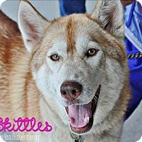 Adopt A Pet :: Skittles-Foster Needed! - Carrollton, TX