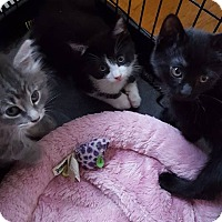 Adopt A Pet :: Janice, Rizzo (tux male) Denis - Berkeley Hts, NJ