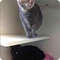Adopt A Pet :: Muzzy - Duluth, MN