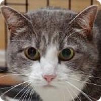 Adopt A Pet :: Chessie - Medford, MA