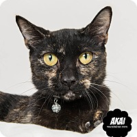 Adopt A Pet :: Akai - Wyandotte, MI