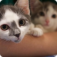 Adopt A Pet :: Monkey and Mochi - Montclair, NJ