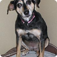 Adopt A Pet :: Lilly - Ruidoso, NM