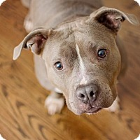 Adopt A Pet :: Opal ~ Happy Hippo! - Caldwell, NJ