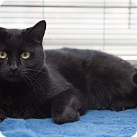 Adopt A Pet :: Minx - Toronto, ON