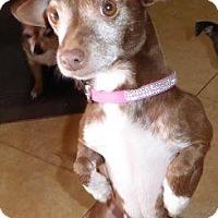 Adopt A Pet :: RaeAnn - San Diego, CA