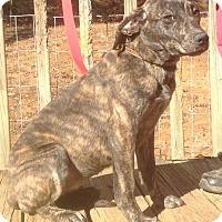 Adopt A Pet :: Dee- In Rhode Island! - Brattleboro, VT