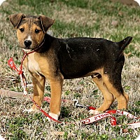 Adopt A Pet :: Max - Harrisonburg, VA
