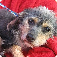 Adopt A Pet :: Alyce-WATCH MY VIDEO!!! - Irvine, CA