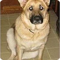 Adopt A Pet :: bella bells urgent will reduce - Allentown, PA