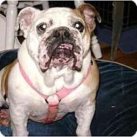 Adopt A Pet :: Clementine - Winder, GA