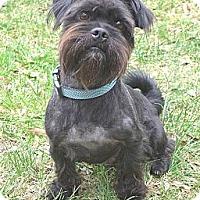 Adopt A Pet :: Barkley - Mocksville, NC