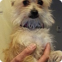 Adopt A Pet :: Socks - Calgary, AB