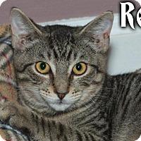 Adopt A Pet :: Rex - River Edge, NJ