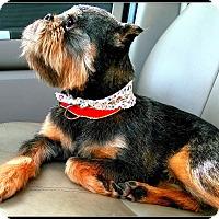 Adopt A Pet :: HATTIE - ADOPTION PENDING - Seymour, MO
