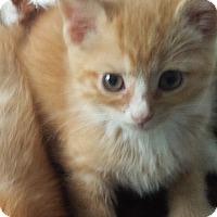 Adopt A Pet :: Reuven - Fairborn, OH