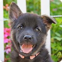 Adopt A Pet :: Cambria von Calw - Thousand Oaks, CA