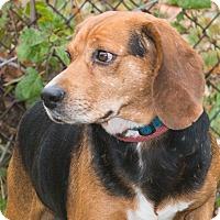 Adopt A Pet :: Sixx - Elmwood Park, NJ