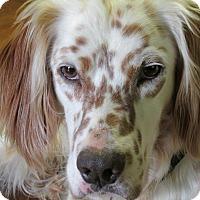 Adopt A Pet :: OSCAR - Pine Grove, PA