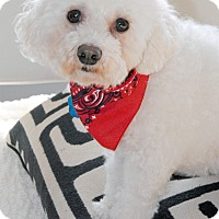 Adopt A Pet :: Daisy - Omaha, NE