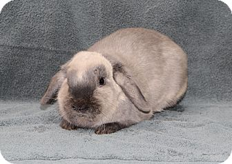 Other/Unknown Mix for adoption in Fountain Valley, California - Patience