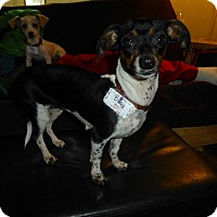 Adopt A Pet :: Daisy - Wyanet, IL