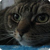 Adopt A Pet :: GUPPY - Brea, CA